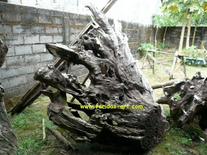 Akar Jati Gembol & Erosi - Model C.11